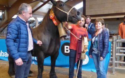 VI Concurso de Ganado Equino de la Montaña Asturiana