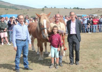 Hispano Bretona  - Yegua con cría   1  Premio