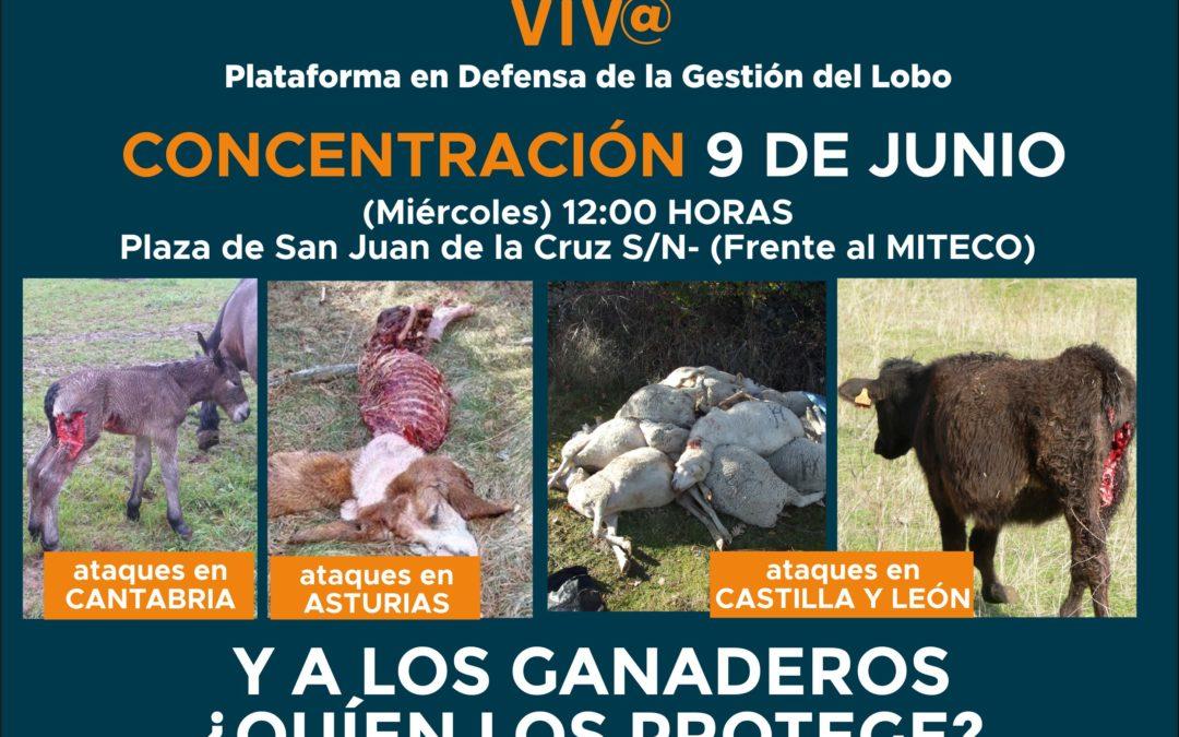 MOVILIZACIÓN CONTRA LA GESTIÓN DEL LOBO EL 9 DE JUNIO EN MADRID